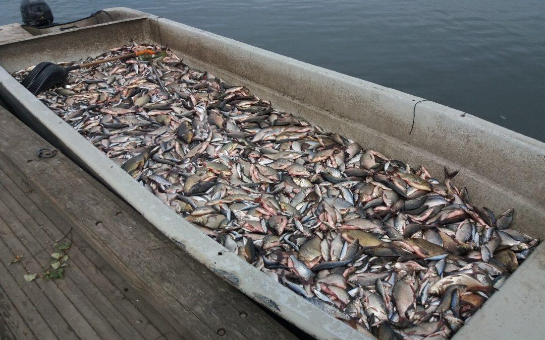 Lahti aikoo rakentaa kaupallisten kalastajien saaliille lajittelutilat