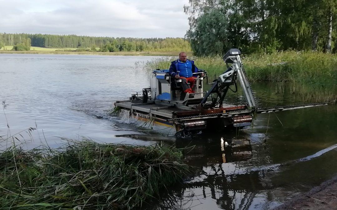 Matala vedenpinnantaso haittasi kesäniittoja Vesijärvellä