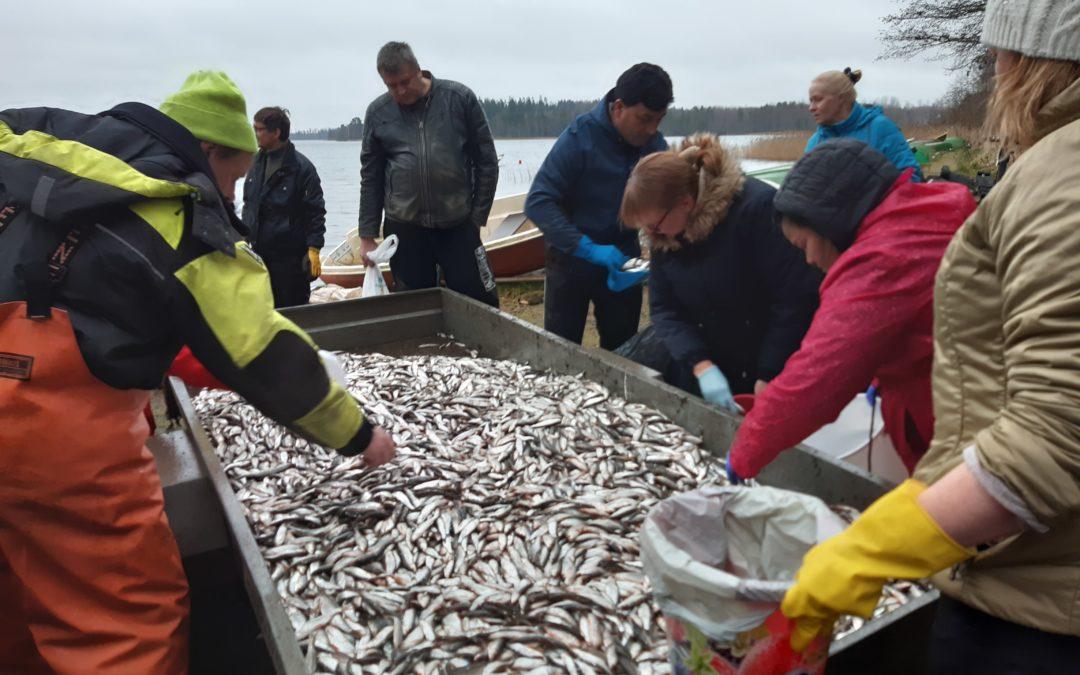 Kymijärven hoitokalastuksella huipputulos