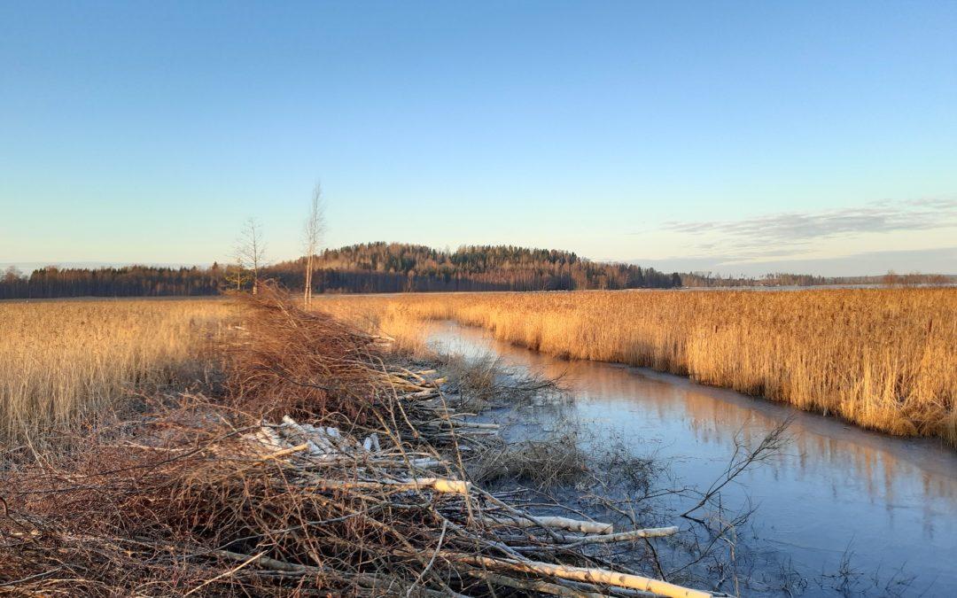 Kommentoi Kutajärven Natura 2000 -alueen hoito- ja käyttösuunnitelman luonnosta