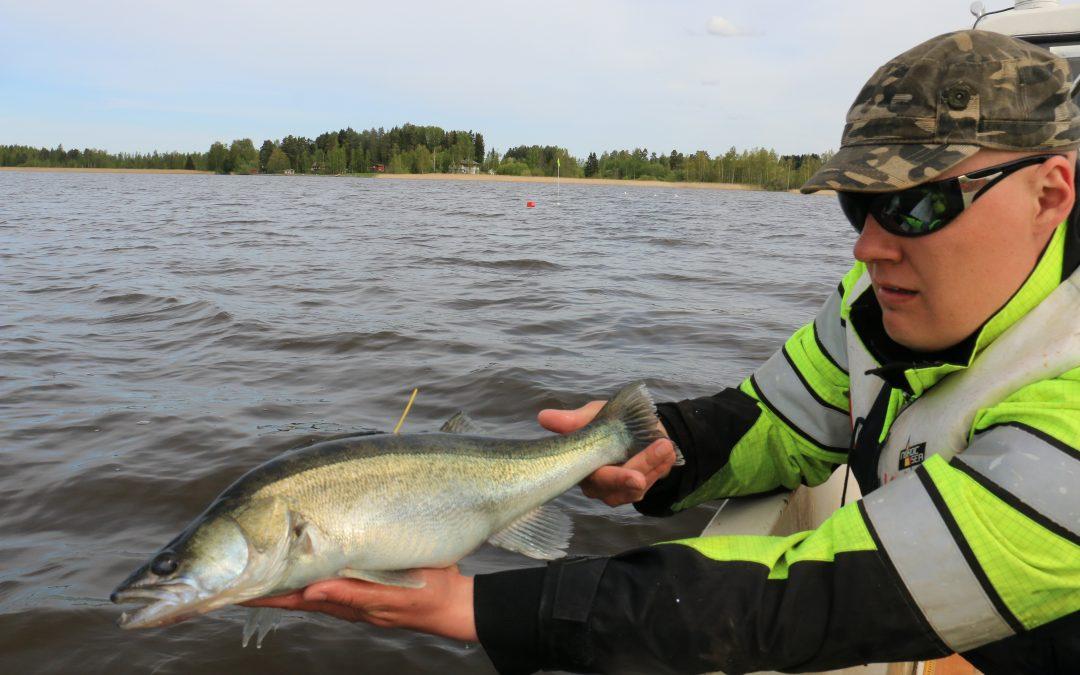 Merkintätutkimus paljasti kalojen salaiset liikkeet