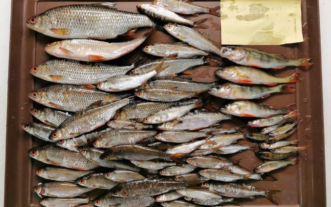 Vähä-Tiilijärven hoitokalastusta on syytä jatkaa