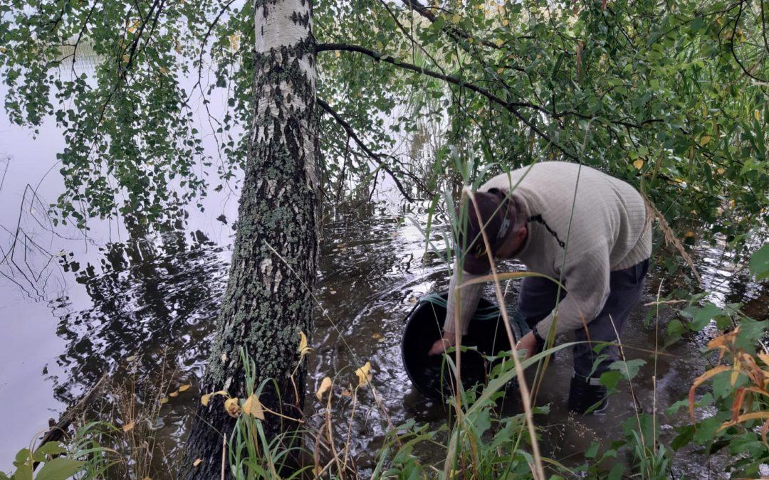 Petokalaistutukset Vesijärveen kasvussa