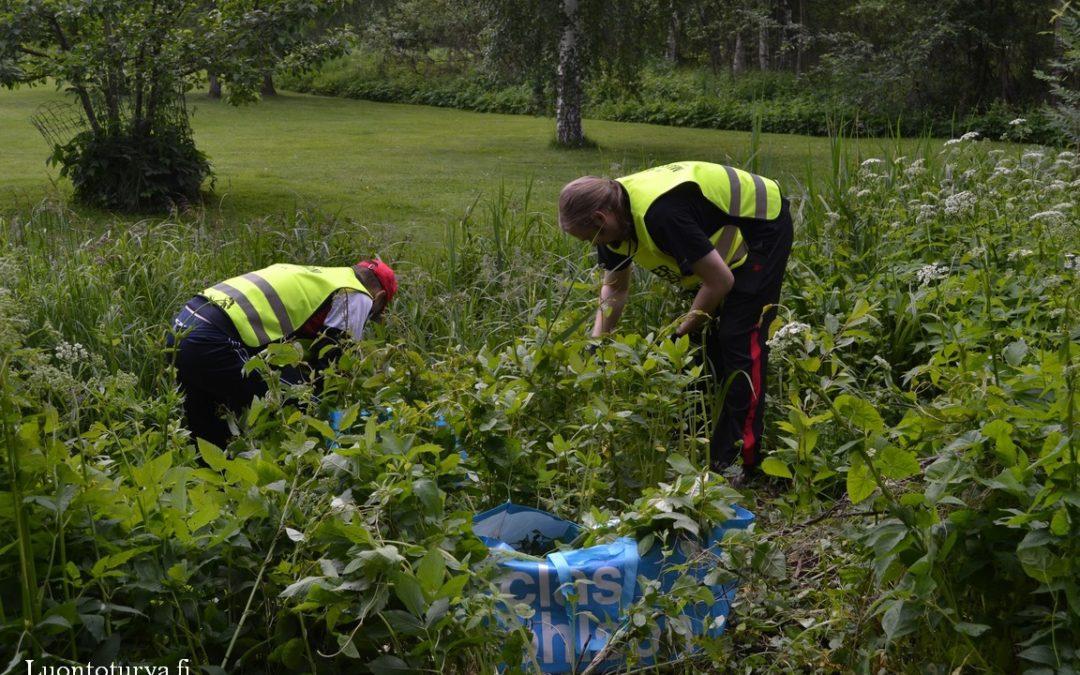 OP Päijät-Häme jatkaa Vesijärvi-työn kumppanina