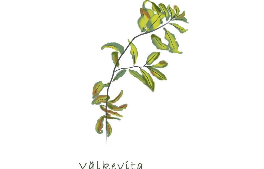 Kutajärven Natura 2000-alueen luontokartoitukset valmistuneet